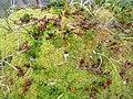 Juniper berries Lake Tasersuaq hike Qaqortoq Greenland.jpg