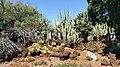 KCC Cactus Garden.jpg