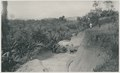 KITLV - 12617 - Kleingrothe, C.J. - Medan - Road between the tobacco companies Kotta-Djoeroeng and Namu Suru near Gunungrintih in Deli - 1903.tif
