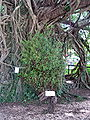 Kam Tin Tree House - 2007-09-30 14h07m40s SN200812.jpg