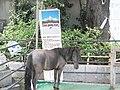 Kanda Jinja horse.JPG