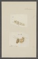 Kend - Print - Iconographia Zoologica - Special Collections University of Amsterdam - UBAINV0274 066 01 0085.tif