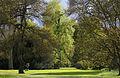 Kew Gardens au printemps - vue du parc.jpg