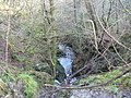 Kilcreggan- Barremman Gare Loch Forestry Track - geograph.org.uk - 338794.jpg