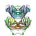 Kindling fluorescent protein 1xmz.jpg
