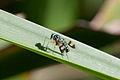 Kioloa fauna 145.jpg
