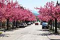Klagenfurt Ferd. Jergitsch Strasse 22042009 81.jpg