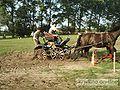 Konie 10.jpg
