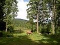 Krávy v oblasti pod Hoverlou.jpg