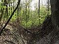 Krasnyy Khutir forest10.jpg