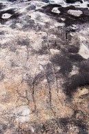 Ku-ring-gai Chase - petroglyph