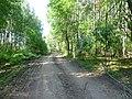 Kungursky District, Perm Krai, Russia - panoramio (140).jpg
