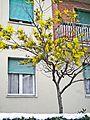 La Castellina-02,02,2012-neve e primavera.jpg