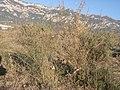 La serra de Queralt des de la serra de Noet DSCN3844.jpg