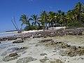 Lagon Bleu - Rangiroa - panoramio (48).jpg
