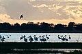 Lake Burrumbeet (24488014000).jpg