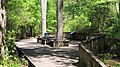 Lake Livingston SP Boardwalk Trail.jpg