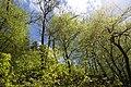 Landschaftsschutzgebiet Nagoldtal (8 Teilgebiete), Kennung 2.35.037, Lützengraben, Wildberg 05.jpg
