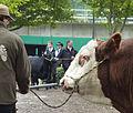 Landwirtschaftliches Hauptfest Bullenkopf.jpg