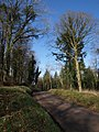 Lane past Ridgeway Plantation - geograph.org.uk - 687982.jpg