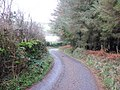 Lane to Westcott - geograph.org.uk - 1607626.jpg