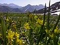 Lar from Canyon, کوه های گله گچ وسفیداب ازتنگه - panoramio.jpg
