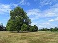 Lawn, Stratfeld Saye House - geograph.org.uk - 1423004.jpg
