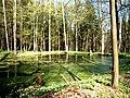 Leśny staw - panoramio (2).jpg