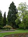 Leschi Park sequoia 02.jpg
