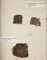 Lichenes Helvetici III IV 1842 021.jpg