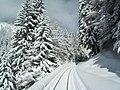 Ligne Saint-Gervais - Vallorcine - entre Argentiere direction Montroc 1.JPG