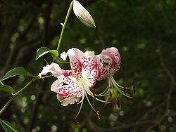 blomnamn på engelska