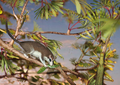 Live reconstruction of Cretophasmomima melanogramma - journal.pone.0091290.g007.png