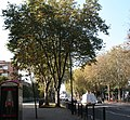 London Planes, Mile End Road - geograph.org.uk - 594542.jpg