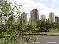 Londrina cidade do coração - panoramio.jpg