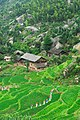 Longhui, Shaoyang, Hunan, China - panoramio - kiwifruit168 (9).jpg