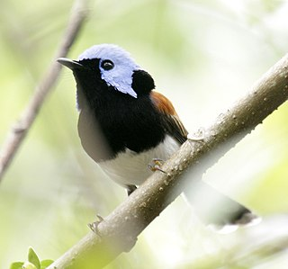 1852 in birding and ornithology