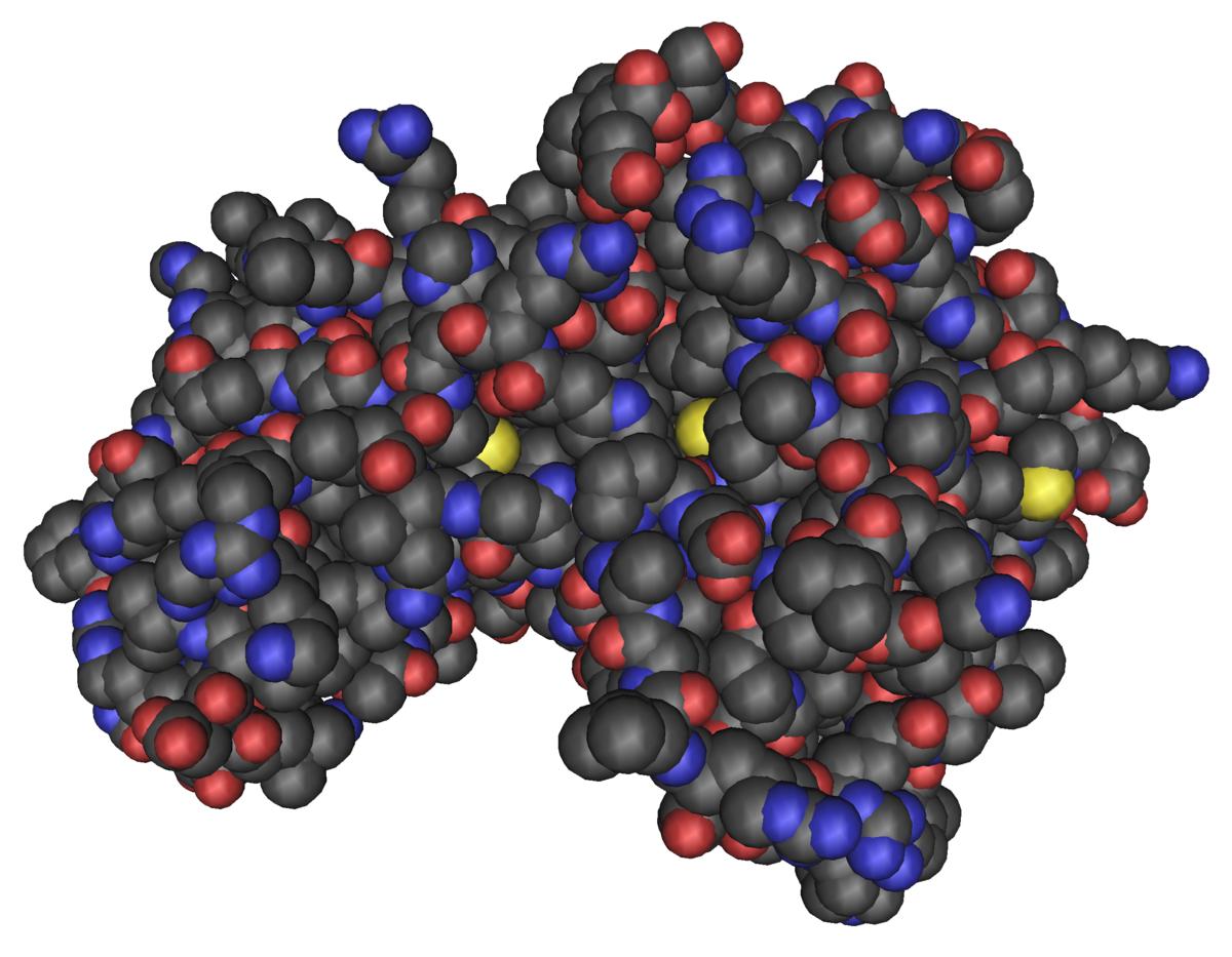 wee1 como proteína quinasa 2 y diabetes