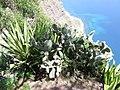 Madeira - Cabo Girao (2093431612).jpg