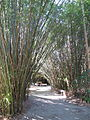 Magnolia Plantation and Gardens - Charleston, South Carolina (8556569974).jpg