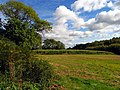 Maize Perimeter - geograph.org.uk - 62457.jpg