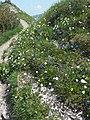 Malá Fatra, kvety v júni (7).jpg