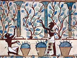 Weinbau im Alten Ägypten, dargestellt in einer Grabmalerei des Neuen Reiches