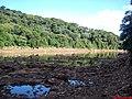 Margem do Tietê onde se extrai pedras para jardins. - panoramio.jpg