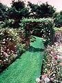 Mary Forthingham rose garden.jpg