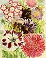 Maule's seed catalogue - 1898 (1898) (14578218068).jpg