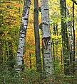 Maurice K. Goddard-Wykoff Run Natural Area (6) (29620903594).jpg
