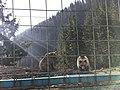 Medvědi v Rehabilitačním centu hnědého medvěda.jpg