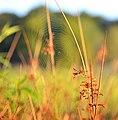 Mentor Marsh Nature Preserve (9597638522).jpg
