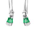 Metatarsal bones07.png